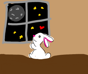 Rabbit loves looking out window at moon