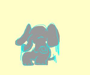 The elephant is freezing