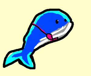 Whale in a bra