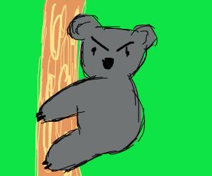 Evil koalas