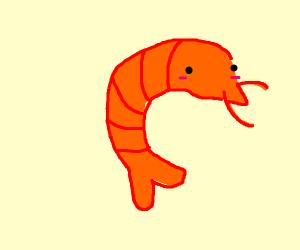 a cute shrimp