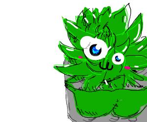 it's Planty, the succulent!!