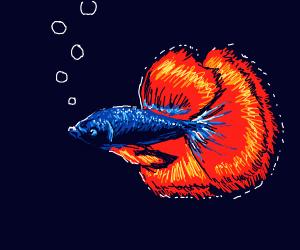 A fish swimming