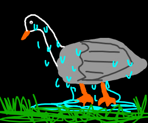 Tired goose
