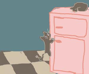Cat climbs a fridge