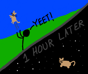 Cat yeeted into space