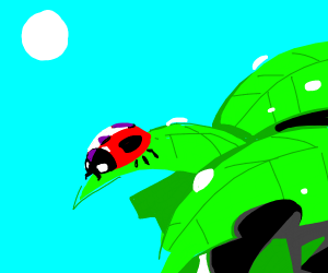 pretty ladybug