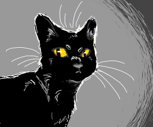 Black cat w/ yellow eyes
