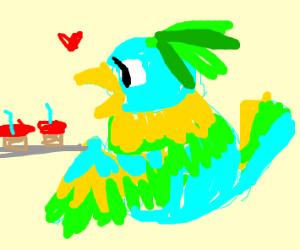Parakeet Baking