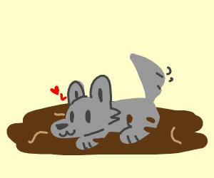 Gray dog in mud
