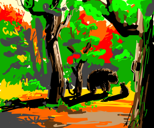 Bears in a forest