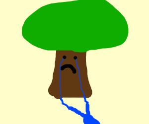 sad tree cries a river