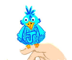 Blue jay sitting on a finger