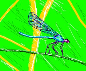 a dragon fly in a field