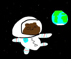 owo bear is an astronaut!