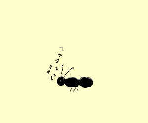 Seeping ant