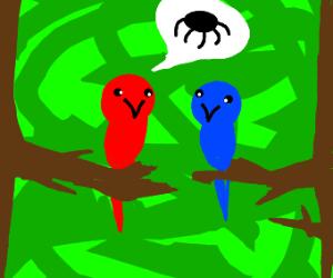 Red bird tells blue bird about spiders