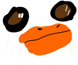 Closeup of ducks face