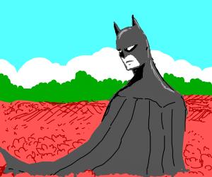 Batman in a meadow with flowers