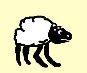 SPOODER sheep