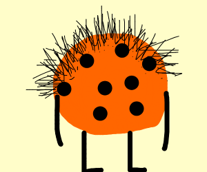 Hairy cookie