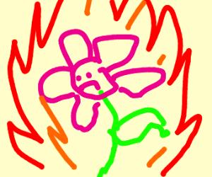 A LITERAL fire flower