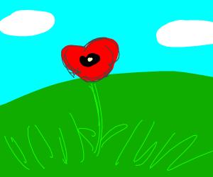 A poppy (flower)
