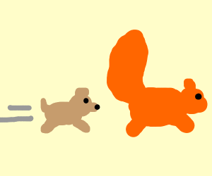 dog chases large orange squirrel