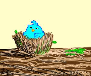 Tiny Blue bird in a tiny nest