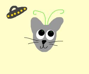 cute alien cat with antenas