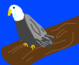 Disappointed eagle