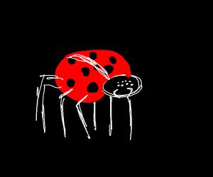 Ladybug spider hybrid