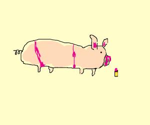 Pig with lipstick and a pink bikini