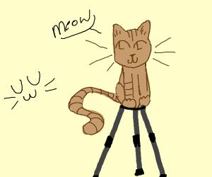 Tide-Pod Cat :3