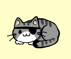 Sweet cat with eyepatch