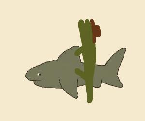 Alligator Cowboy rides a Shark