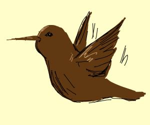 chocolate hummingbird