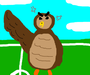 Angry owl on a basketbal field