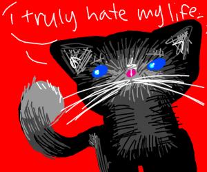 Cat hate its life