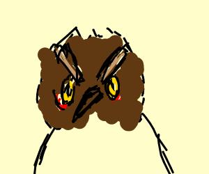 Cranky Owl