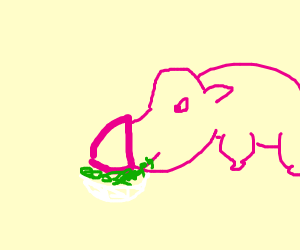 pig eating a salad