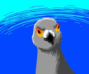 Annoyed Pigeon