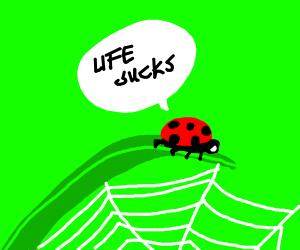 pessimist ladybug