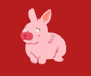 Sweet pastel bunny