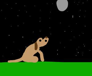 good boy doggo doin a moon stand