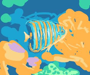 Beautiful exotic fish