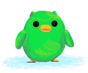 Kiiroitori but its Duolingo