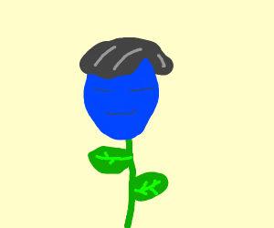 Asian blue tulip