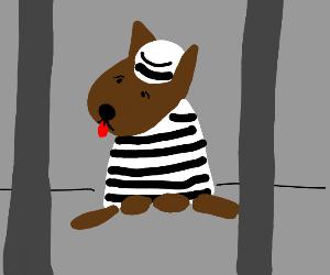 Crime dog