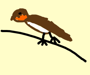 Brown Swallow